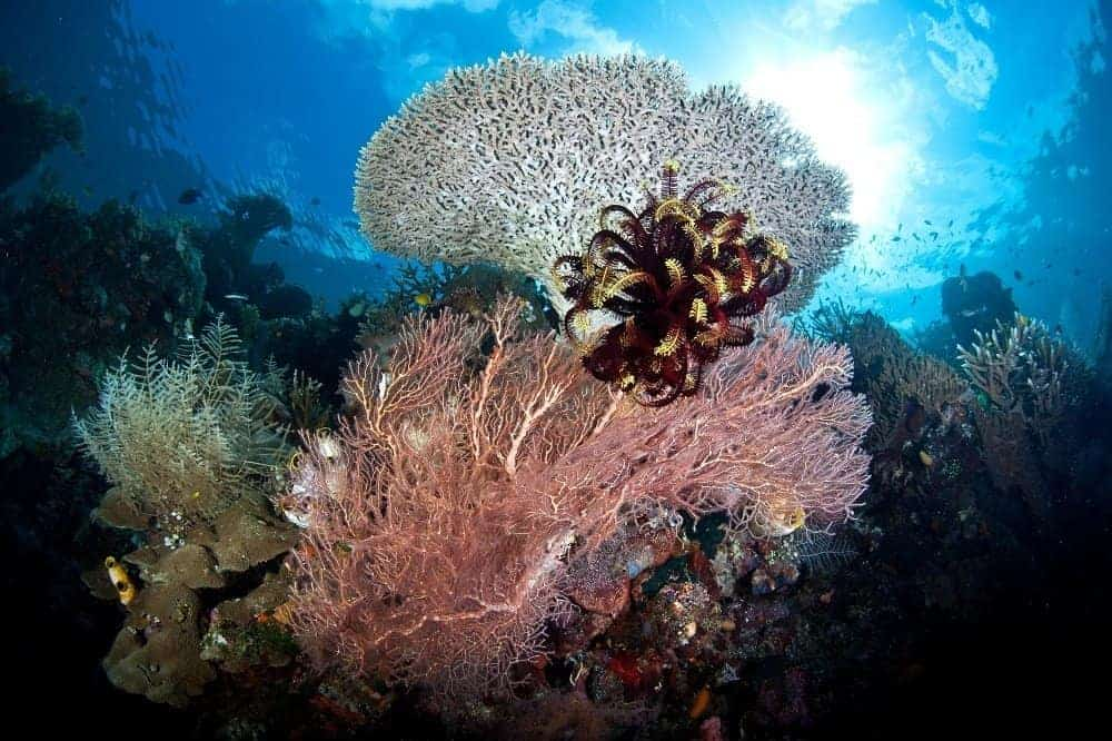 Scuba Diving in Raja Ampat, Indonesia