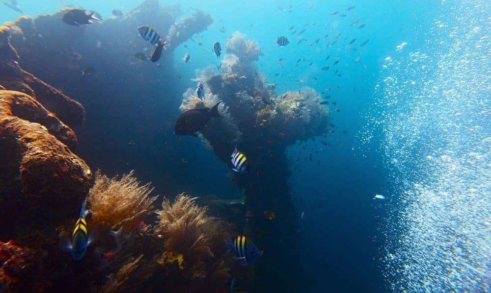Diving on the USAT Liberty wreck. Tulamben, Bali island
