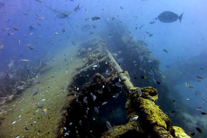 Scuba diving at Yongala wreck, Queensland, Australia
